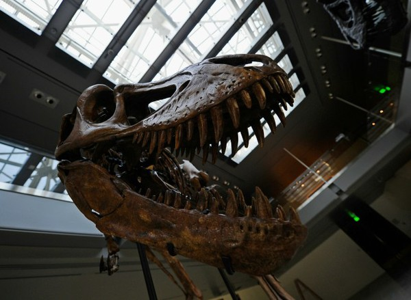 Natural History Museum of L.A. Prepares New Centerpiece For Dinosaur Hall